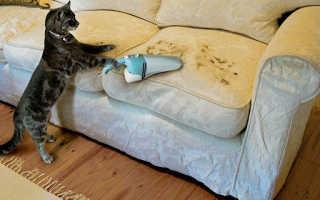 Чесалка для кошек: зачем нужна, разновидности устройств для чесания, как сделать своими руками