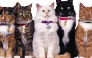 Ошейники для кошек и котов: разновидности с GPS, с феромонами, декоративные и другие
