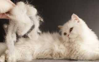Расческа, колтунорез, рукавица для вычесывания, пуходерка для кошек: как ухаживать