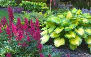 Какие цветы можно посадить в тени: обзор растений, которые не любят солнце, фото