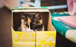 Почему кошки и коты любят коробки: в чем это проявляется, каковы причины, вред и польза