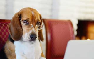 Умнейшие породы собак, легко поддающиеся дрессировке