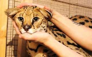 7 развлечений, от которых должен отказаться каждый любитель животных