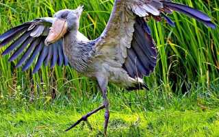 11 необычных помесей животных: подборка фото и фактов