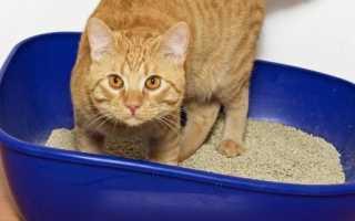 Лоток для кошки или кота, особенности выбора кошачьего туалета