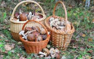 Как чистить грибы: красноголовики, белые, сыроежки, маслята, моховики, лисички, вешенки и другие