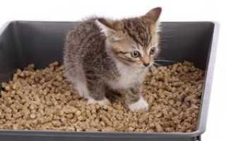 Катсан: наполнитель для кошачьего туалета, разновидности, преимущества и недостатки