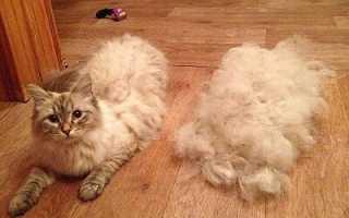 Фурминатор для кошек: плюсы и минусы, как выбрать, в чем преимущества перед расческой