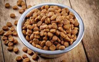 Можно ли размачивать сухой корм для кошек и котов: особенности размачивания