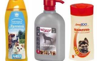 Шампунь от блох для собак: когда и как использовать средство, обзор популярных марок