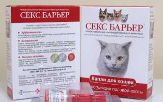 Секс-барьер для кошек и котов: состав и механизм действия антисекса, противопоказания