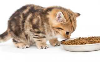 Как воспитывать котенка: особенности и нюансы воспитания, как воспитать животное правильно