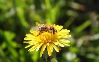 Как хранить мёд в домашних условиях
