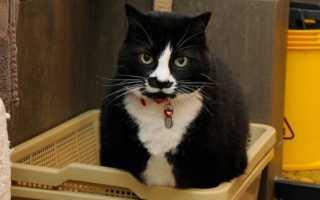 Слабительное для кошек: инструкция по применению лекарств, эффективные аптечные средства