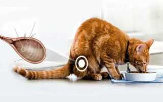 Цистит у котов и кошек: симптомы и лечение в домашних условиях, лекарства