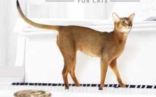 Mealfeel сухой корм для кошек: обзор, ассортимент, состав, плюсы и минусы, отзывы ветеринаров и владельцев