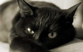 Сколько жизней у кошки: мифы и реальность, особенности кошачьего организма, мистические трактовки