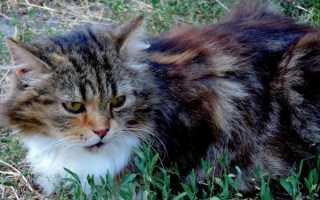 Стоморджил для кошек: инструкция по применению, чем заменить аналоги, отзывы