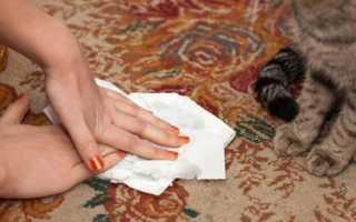 Как избавиться от запаха кошачьей мочи на ковре в домашних условиях, чем вывести пятна