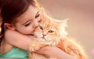 Самые добрые и ласковые породы кошек: преимущества и недостатки таких животных, особенности